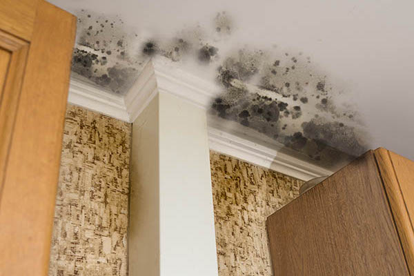 What Are Some Common Signs of Mold?